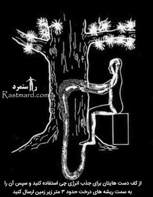 درخت و انرژی چی 2
