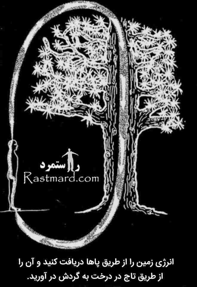 درخت و انرژی چی 5