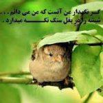 تصویر پروفایل mobin_babaiy