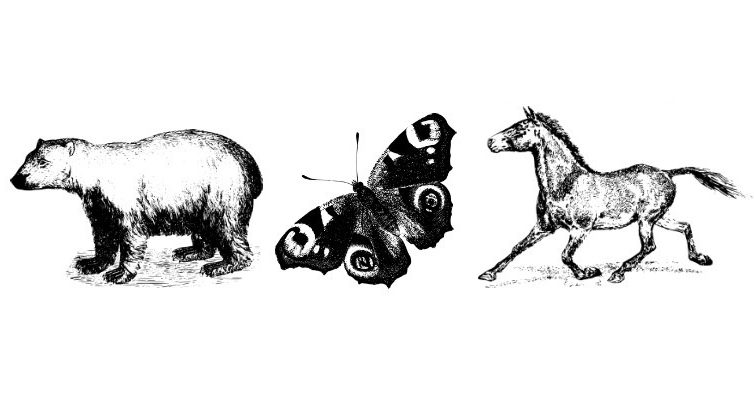 حیوان درون شهریور